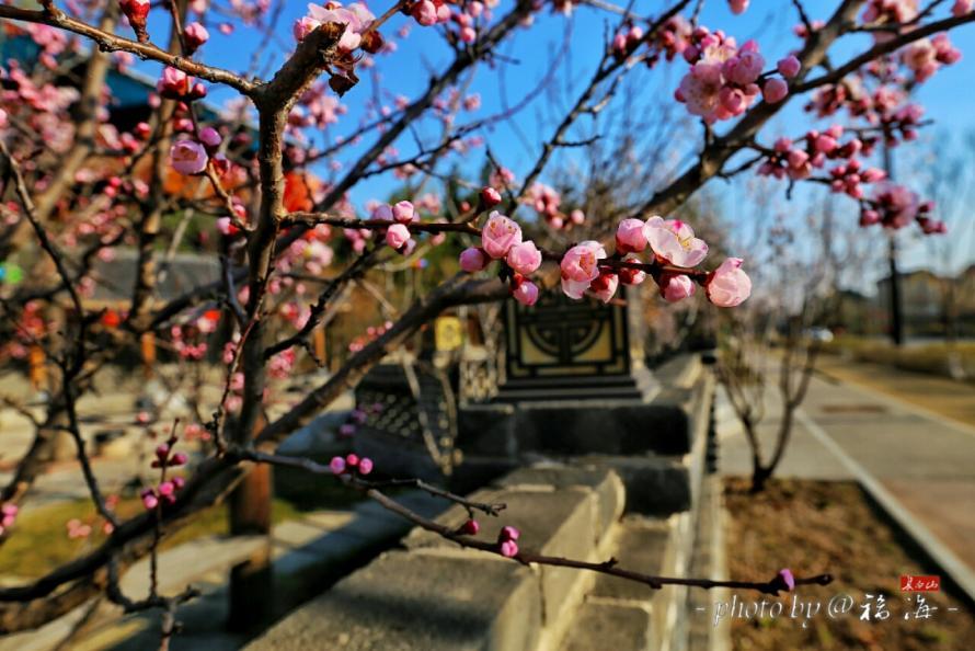 长白山小镇开启花开季